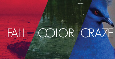 COLOR-CRAZE-FEATURED